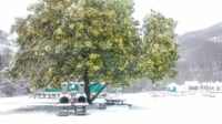 Mimosas y palmeras bajo la nieve al camping Amestoya en Bidarray, la meteorología esta vez aquí a verano de una precisión temible, 10 cm de nieve efectivamente derribada a los horarios anunciadas, ninguno tapemos comprobados, circulación muy fluida